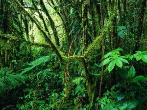 Africa centrale, deforestazione in calo nel bacino del Congo