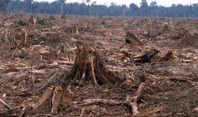 distruzione foreste